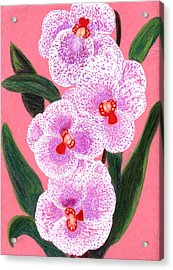 Spotted Orchid Against A Pink Wall Acrylic Print by Carliss Mora