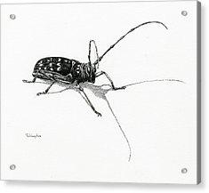 Spotted Pine Sawyer Acrylic Print