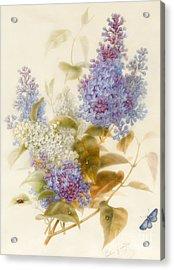Spray Of Lilac Acrylic Print by Pauline Gerardin