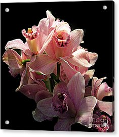 Spray Of Pink Orchids Acrylic Print