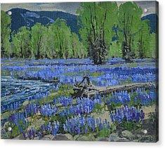 Spread Creek Lupine Acrylic Print by Lanny Grant