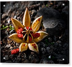 Spread Thy Seed Acrylic Print by Christopher Holmes
