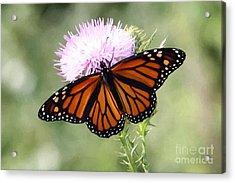 Spread Your Wings Acrylic Print by Anita Oakley