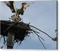 Spread Your Wings Acrylic Print by Johanne Hammond