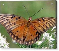Spreading My Wings Acrylic Print by Dottie Dees
