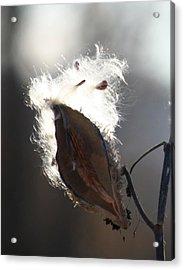 Spreading Seeds IIi Acrylic Print