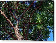 Spreading Trees Provide Shade And Coolness On A Hot Summer Day Acrylic Print by George Westermak