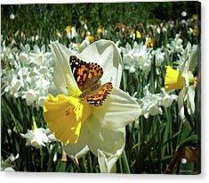 Spring 2016  Acrylic Print