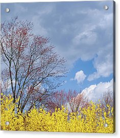 Acrylic Print featuring the photograph Spring 2017 Square by Bill Wakeley