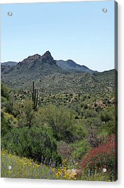 Acrylic Print featuring the photograph Spring Accents by Gordon Beck