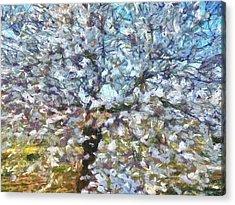 Spring Almond Blossom Acrylic Print by Tracey Harrington-Simpson