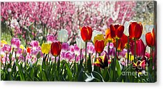 Acrylic Print featuring the photograph Spring by Angela DeFrias