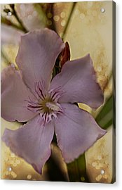 Acrylic Print featuring the photograph Spring by Annette Berglund