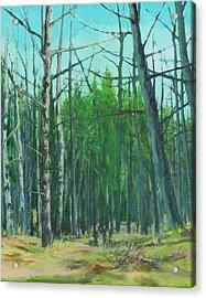 Spring Aspens Acrylic Print
