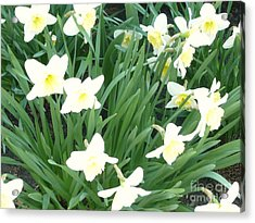Spring At Last Acrylic Print by Barb Montanye Meseroll