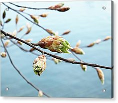 Spring At The Lake Acrylic Print