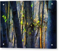 Spring Awakening In The Forest Acrylic Print