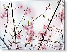 Spring Awakening Acrylic Print by Eena Bo