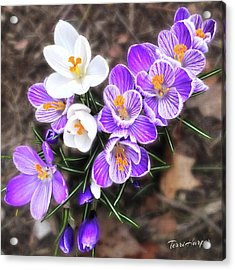 Spring Beauties Acrylic Print
