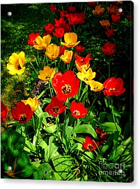 Spring Beauty Acrylic Print by Olivier Le Queinec