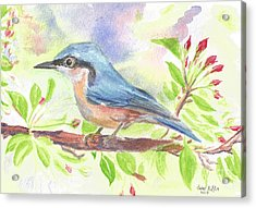 Spring Bird  Acrylic Print by Isabel Proffit