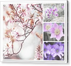 Acrylic Print featuring the photograph Spring Bloom Collage 1. Shabby Chic Collection by Jenny Rainbow