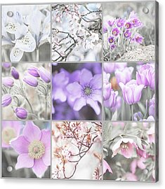 Acrylic Print featuring the photograph Spring Bloom Collage. Shabby Chic Collection by Jenny Rainbow
