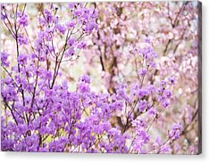 Acrylic Print featuring the photograph Spring Bloom Of Rhododendron  by Jenny Rainbow