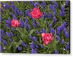 Acrylic Print featuring the photograph Spring Blooms by Phyllis Peterson