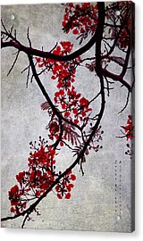 Spring Bloosom In Maldives. Flamboyant Tree II. Japanese Style Acrylic Print by Jenny Rainbow