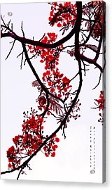 Spring Bloosom In Maldives. Flamboyant Tree Acrylic Print by Jenny Rainbow