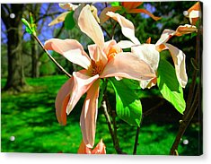 Acrylic Print featuring the photograph Spring Blossom Open Wide by Jeff Swan