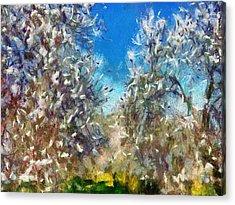 Spring Blossom Acrylic Print by Tracey Harrington-Simpson