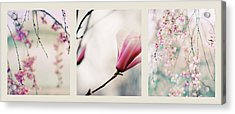 Acrylic Print featuring the photograph Spring Blossom Triptych by Jessica Jenney