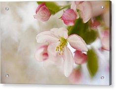 Spring Blossom Whisper Acrylic Print