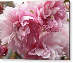 Spring Blossoms #1 Acrylic Print