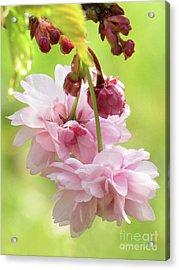 Spring Blossoms #8 Acrylic Print