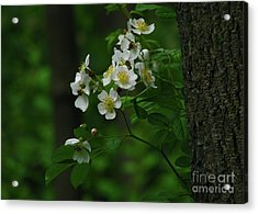 Acrylic Print featuring the photograph Spring Blossoms by Deborah Johnson