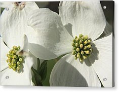 Acrylic Print featuring the photograph Spring Blossoms by Diane Merkle