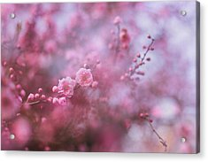 Spring Blossoms In Their Beauty Acrylic Print