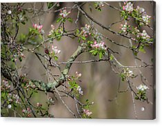 Spring Blossoms 2 Acrylic Print