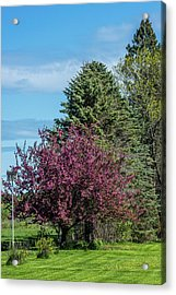 Acrylic Print featuring the photograph Spring Blossoms by Paul Freidlund