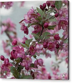 Acrylic Print featuring the photograph Spring Blossoms by PJ Boylan