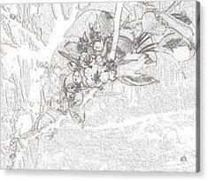 Spring Blossums Acrylic Print