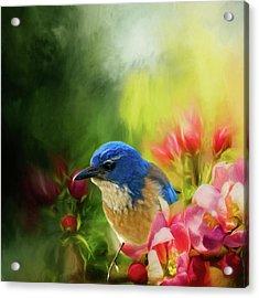 Spring Blue Jay Acrylic Print