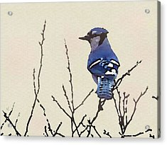 Acrylic Print featuring the digital art Spring Bluejay by Shelli Fitzpatrick