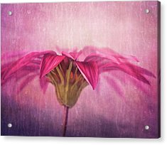 Acrylic Print featuring the photograph Spring Blush by Amy Weiss