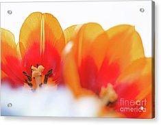Spring Breeze Acrylic Print by Afrodita Ellerman
