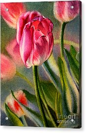 Spring Breeze Acrylic Print by Arena Shawn