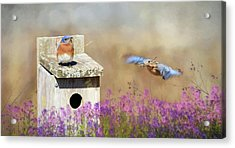Acrylic Print featuring the photograph Spring Builders by Lori Deiter